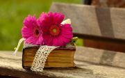 성경, 책