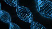유전자 dna