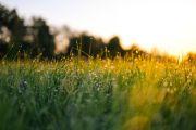 신비 아침 이슬 성령 햇빛 일출 풀 은혜 빛