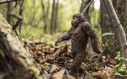 유인원 원숭이 진화 창조