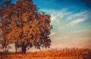 가을 pixabay