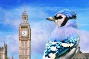 시계탑 파랑새