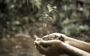 grow growing plant hand nature