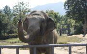 코끼리 서울대공원