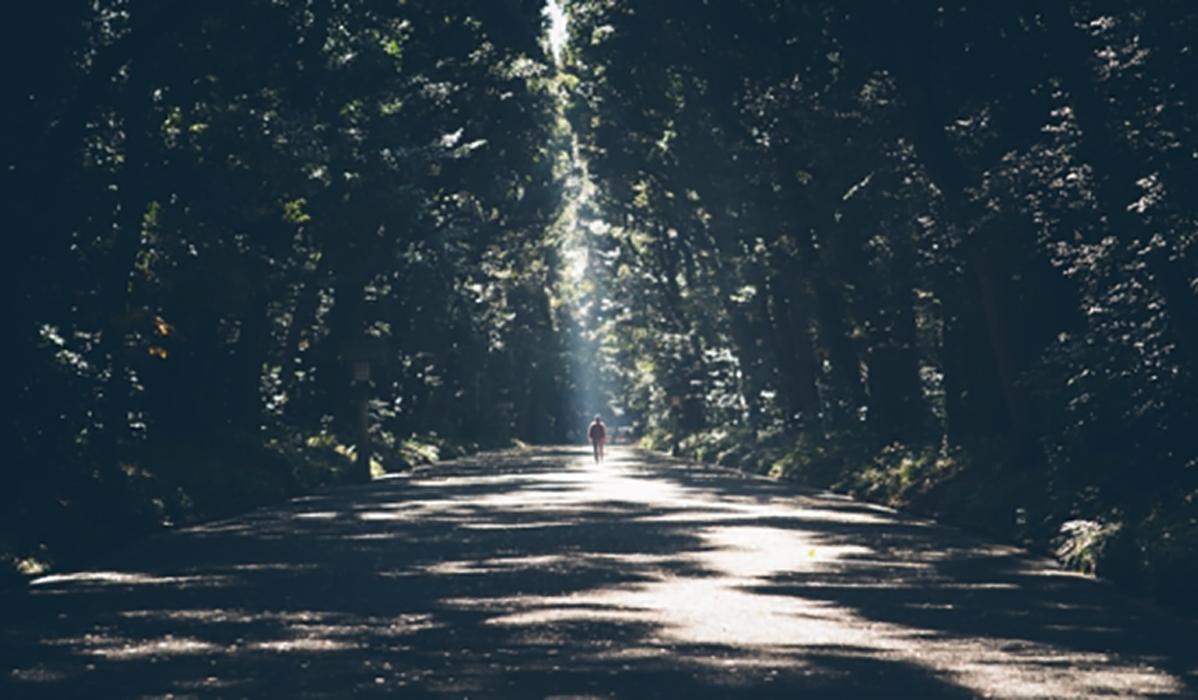 숲 햇살 산책 걸음 길 믿음