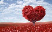 love tree garden flower