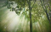 심미안 성령 임재 숲 나무 빛 거룩 햇살 동역