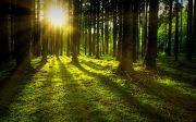 Nature Forest Sun Moss Rays Green Sunbeam Tree 새벽 기도 습관 숲 잔디 푸른 햇살 햇빛