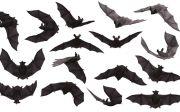 박쥐 포유 동물 무서운 소름 등골 오싹 괴물 뱀파이어 할로윈 생물 밤