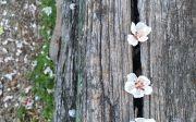 삶과 사랑 이혜리 벚꽃나무
