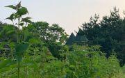 두레마을 약초밭