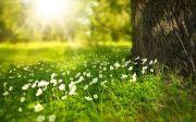 오요한 시편  햇살 꽃 초원 나무 줄기 햇빛 빛 광선 야생화 야생초