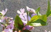 이혜리 꽃