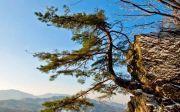 바위에 뿌리내린 두레나무