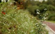 풀꽃 산책로 늦여름 산책 풀 공원 풍경